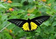 Яркие Живые Бабочки изИндонезии