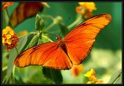 Экзотические Живые Бабочки изЮАР